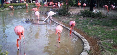 新しい自分-上野動物園7