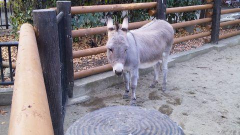 新しい自分-上野動物園4