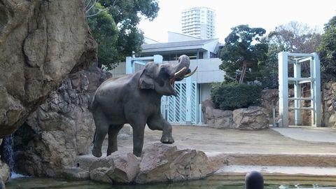 新しい自分-上野動物園3