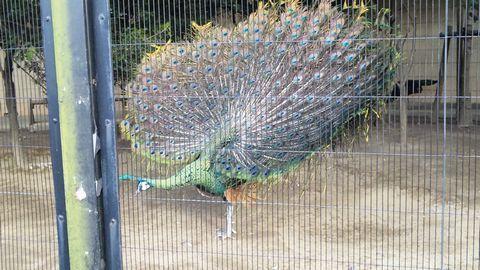 新しい自分-上野動物園8