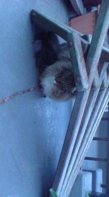 dog2さんのブログ-110106_1027~01.jpg