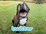 hfa twitter