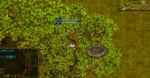 トラたんのREDSTONE日記-鳥の巣