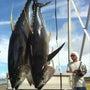 釣り~ニュージーラン…