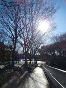 いろいろな日々のブログ-冬の陽