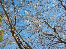 いろいろな日々のブログ-冬桜
