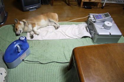 人とペットの健康長寿研究所☆須崎動物病院山口移動式診療所-未設定