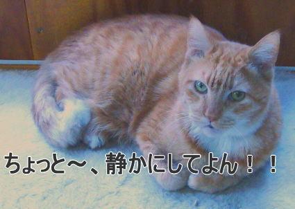 せつこマ~マのウチのネコどもブログ-迷惑そうなリン君