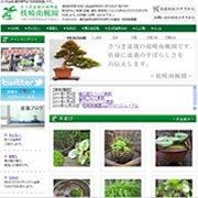 $枕崎南楓園のさつき盆栽育て方-web