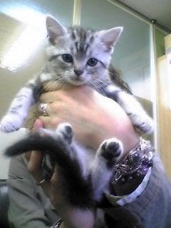 「ぼくたちネコだけど。」-baby ナッツ