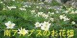 タカネビランジ‐高山植物とそこに生きる生物‐-バナー南アルプスのお花畑