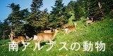 タカネビランジ‐高山植物とそこに生きる生物‐-バナー南アルプスの動物