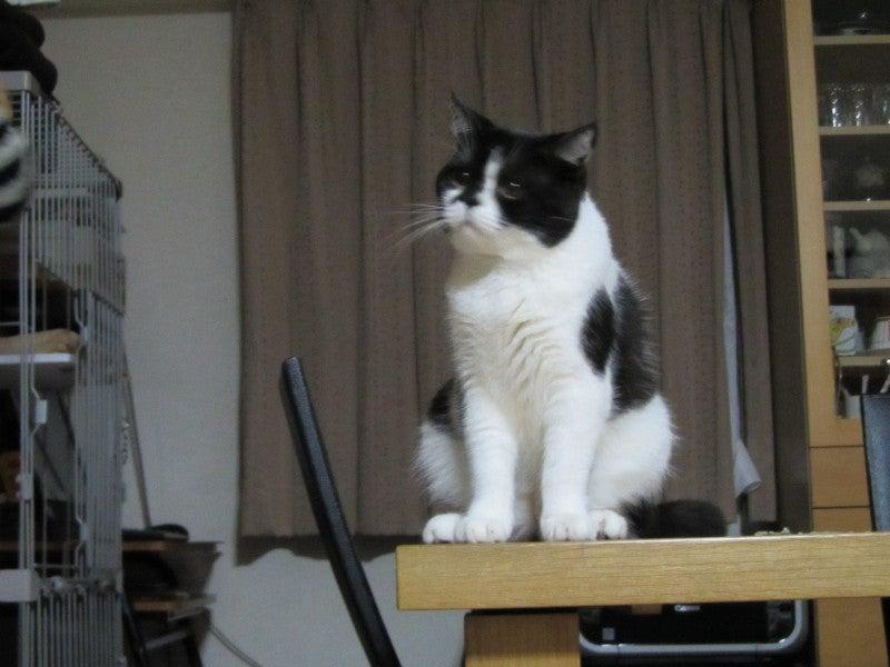 ushikun-mamaのブログ
