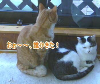 せつこマ~マのウチのネコどもブログ-ネコども1