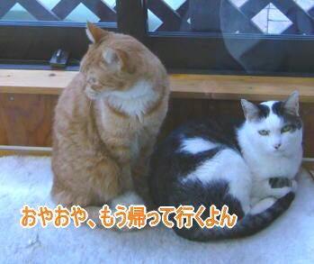 せつこマ~マのウチのネコどもブログ-ネコども2