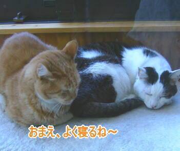 せつこマ~マのウチのネコどもブログ-ネコども3