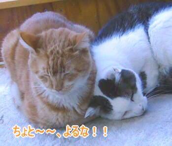 せつこマ~マのウチのネコどもブログ-ネコども4