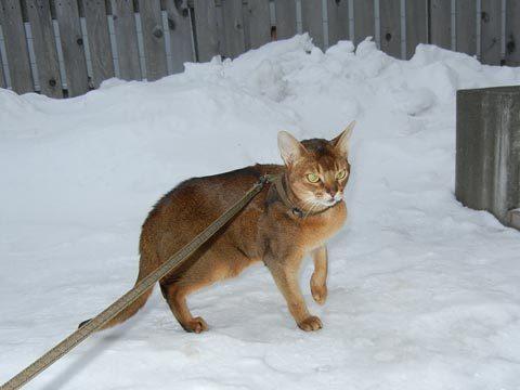 今冬の散歩は拒否されています