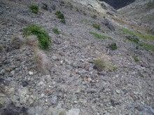 小笠原エコツアー 父島エコツアー         小笠原の旅情報と小笠原の自然を紹介します-ガレ地