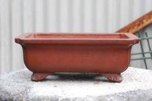 鉢屋のミニ盆栽日記