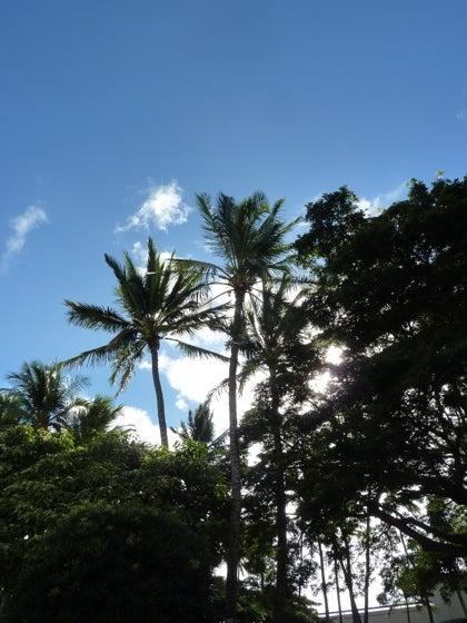 RIO's 「TRAVEL BOOK」ハワイ旅行記更新ちゅう~!