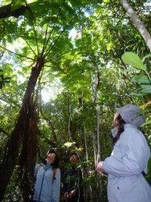 小笠原エコツアー 父島エコツアー         小笠原の旅情報と小笠原の自然を紹介します-マルハチ