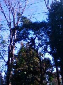コミュニティ・ベーカリー                          風のすみかな日々-木