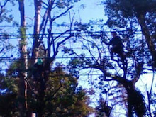 コミュニティ・ベーカリー                          風のすみかな日々-木2