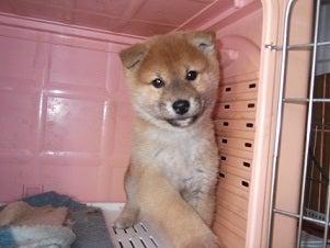ペットサロンふじもとの日常と子犬情報
