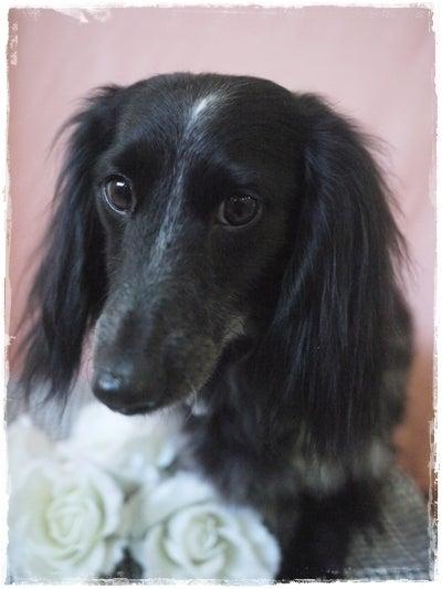 旅犬Lani&Leaのほほん風船記-Pon