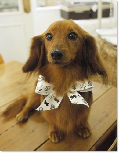 旅犬Lani&Leaのほほん風船記-Lani