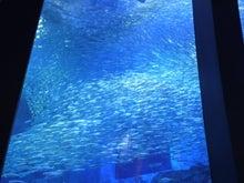 ぶぶの音楽ブログ-魚群
