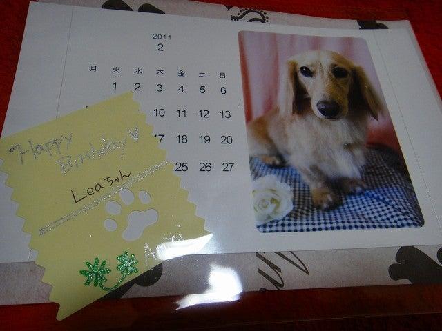 旅犬Lani&Leaのほほん風船記-Amici