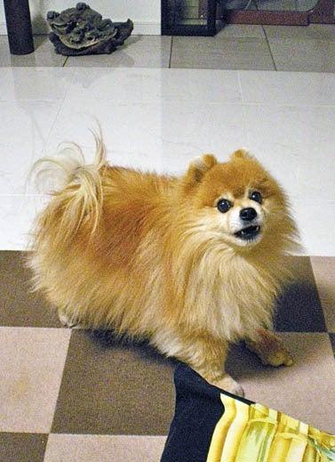 漫画家の犬たち-ポヤジ