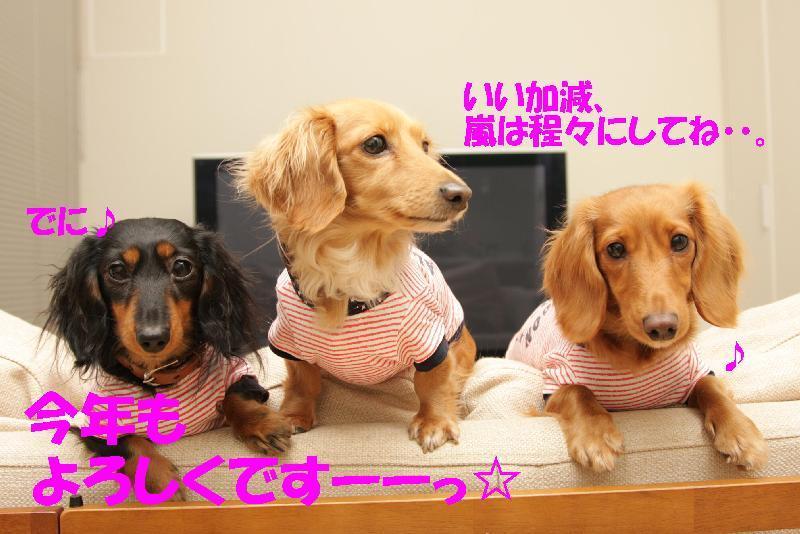 ちびダックス3姉妹 「いちにぃさんごLife♪」