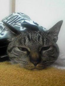 ずれずれブログ…湘南で猫と暮らせば…-110113_0231~01.JPG