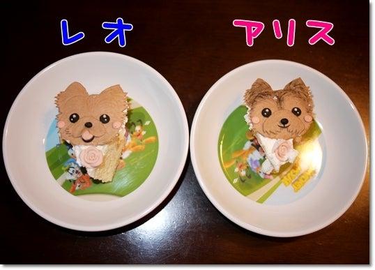 ヨーキー ♪レオ&アリス♪