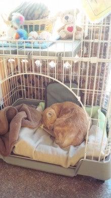 Cat Life~おてんば娘の毎日~-110202_1619~01.jpg