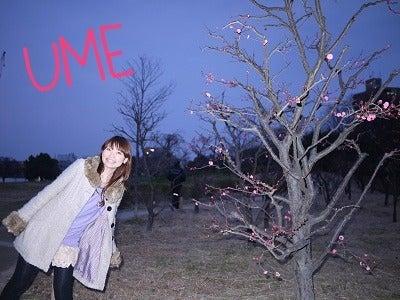 梅が咲いてました☆