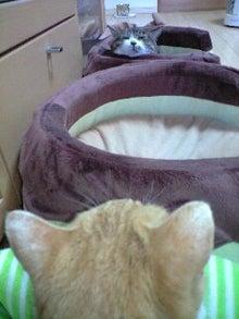ずれずれブログ…湘南で猫と暮らせば…-110209_0851~0001.jpg