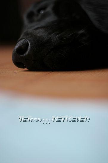KAI-TAI-TETO-GOO∴∵RETRIEVER カイタイテトグゥ【故に何故ならば】レトリーバー-鼻紋トラン