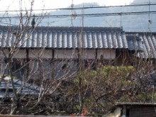 京都嵐山日和-0210_1