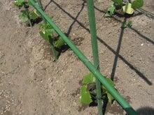 家庭菜園の野菜作り、上達のコツと菜園ライフの楽しみ方-株間