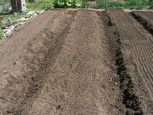 家庭菜園の野菜作り、上達のコツと菜園ライフの楽しみ方-畝幅