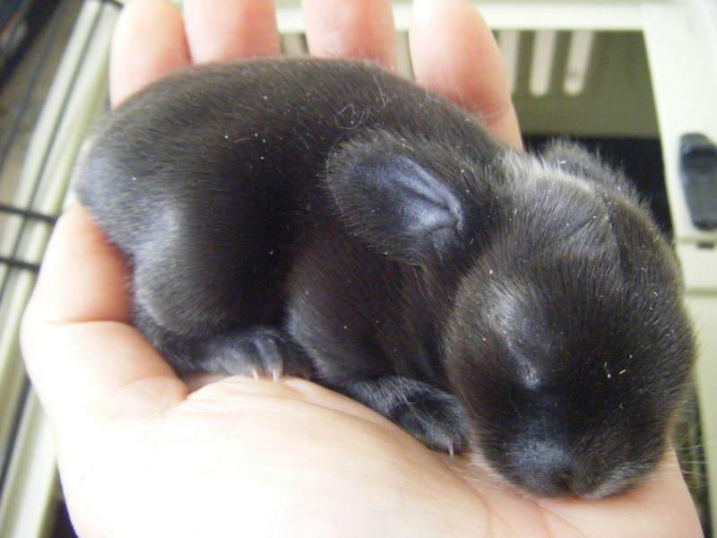 stubborn doggie in Australia                  強情っぱり犬はここで生きてくよ・・・-ちゃ吉 Day8
