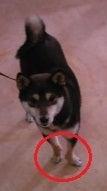 広島動物ネットワークのブログ
