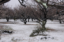 Open!YAMAnDA-雪の日2