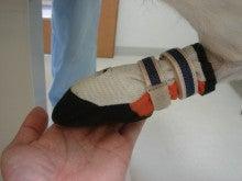 ペットの「がん」 ―レオどうぶつ病院腫瘍科―-靴