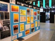 タクミの野鳥ブログ-デジタルカメラで野鳥撮影-御苗場2011Wild Bird Photo ~光と影~