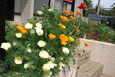 ひかりの輪・千葉支部 支部長 田渕智子のブログ-玄関の花